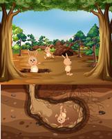 Coniglio che vive nella natura