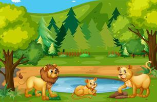 Famiglia Lion che vive nella giungla vettore