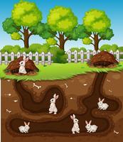 Coniglio scavando il buco