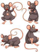 Mouse con pelliccia grigia in quattro azioni vettore