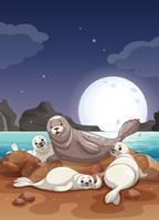 Sigilli che vivono in riva al mare di notte vettore