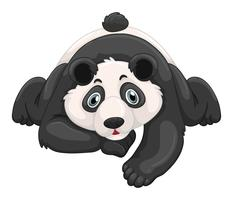 Panda carino che striscia a terra