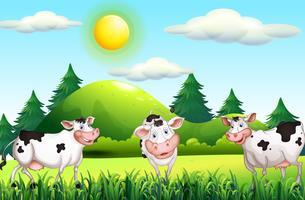 Le mucche stanno in piedi nell'aia