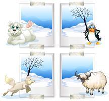Quattro specie di animali artici vettore