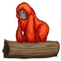 orangutan vettore