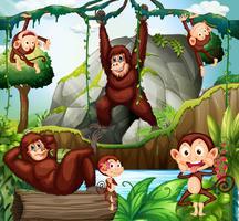 Diversi tipi di scimmie nella foresta vettore