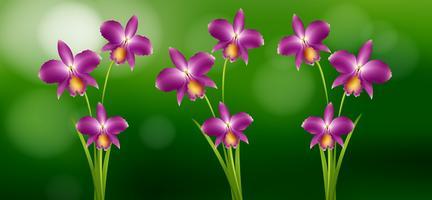 Orchidea viola in giardino vettore