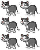 Gatto grigio con diverse espressioni facciali
