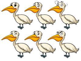 Uccello del pellicano con diverse emozioni vettore