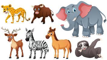 Animali selvatici su sfondo bianco