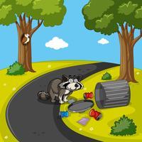 Raccoon che cerca rifiuti nel parco