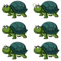 Tartaruga con diverse espressioni facciali