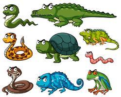 Diversi tipi di rettili vettore