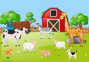 Molti animali nell'aia
