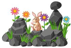 Coniglio carino seduto sulle rocce