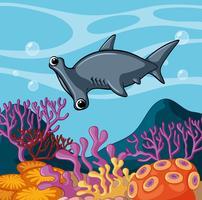 Squalo martello che nuota sotto l'oceano