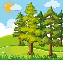 Scena di sfondo con alberi di pino sul campo