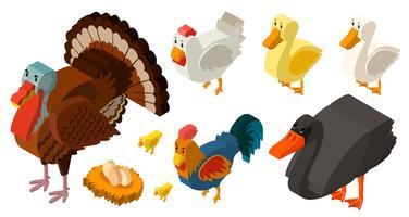 Progettazione 3D per diversi tipi di uccelli della fattoria