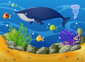 Balena e piccoli pesci sotto il mare vettore