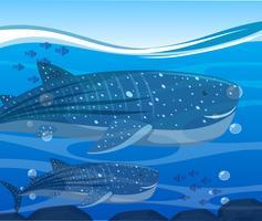Squali balena e pesci sotto l'oceano vettore