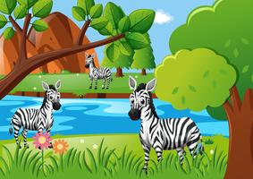 Zebra che vive vicino al fiume vettore
