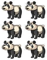 Panda con diverse espressioni facciali vettore