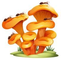 Funghi con le formiche vettore