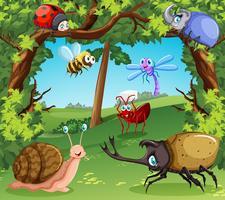 Molti tipi di insetti nella foresta vettore