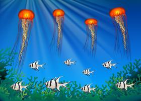 Meduse e pesci che nuotano sotto il mare vettore