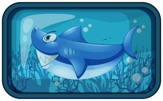 Uno squalo Kappy nell'acquario vettore