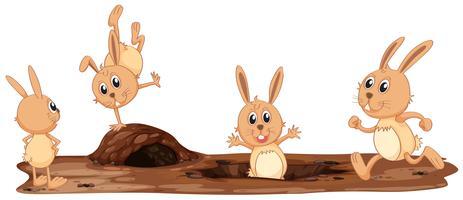 Una serie di simpatici conigli vettore