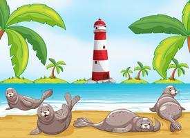 Sigilli rilassanti sulla spiaggia vettore