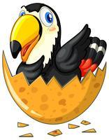 Uovo da cova di uccello Tucano
