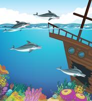 Delfini che nuotano sotto il mare