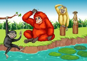 scimmie vettore
