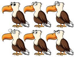 Aquila con diverse espressioni facciali