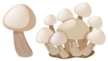 Funghi freschi su sfondo bianco