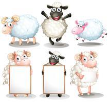 Pecore e agnelli con tavole vuote vettore