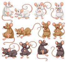 Mouse con diverso colore della pelliccia vettore