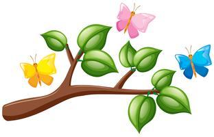 Farfalle che sorvolano il ramo vettore
