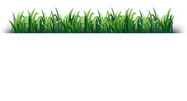 Design senza cuciture con erba verde vettore