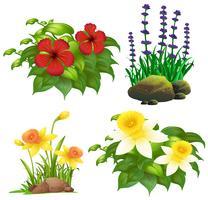 Diversi tipi di fiori tropicali vettore