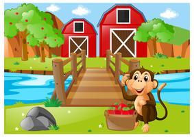 Scimmia e secchio di mele nel frutteto