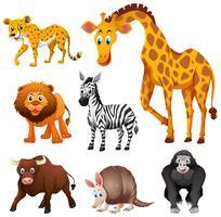 Diversi tipi di animali della giungla vettore