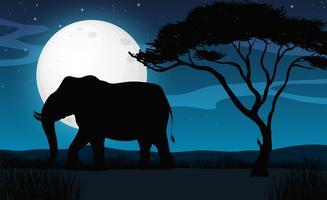 Elefante della siluetta nella notte di Savana