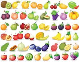 Set di frutta vettore