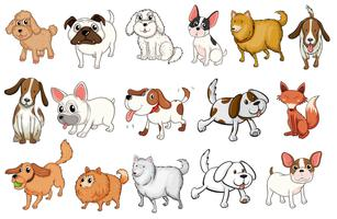 Diverse razze di cani vettore