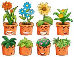 Diversi tipi di piante in vasi di terracotta vettore