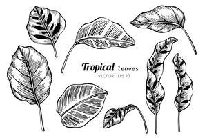 Insieme della raccolta delle foglie tropicali che disegnano illustrazione.