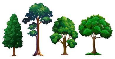 Set di albero diverso
